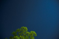 052618 Stars Tree Website Res