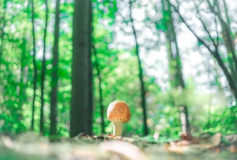 100418 GVSU Mushroom Website Res-2